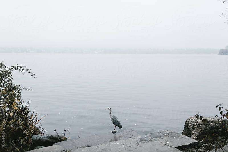 large bird standing by foggy lake by Nicole Mason for Stocksy United