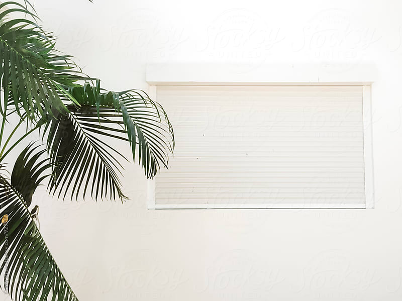 White window and Palm Tree by Carey Shaw for Stocksy United