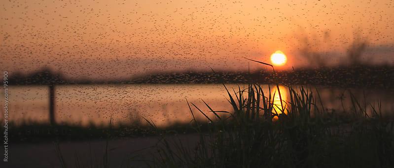 Sunset over lake by Robert Kohlhuber for Stocksy United