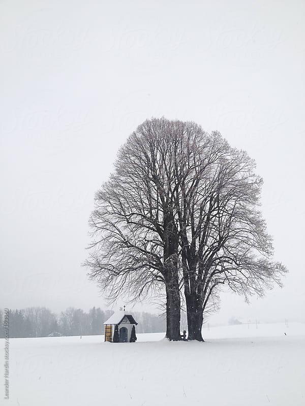 lonesome tree in winterlandscape by Leander Nardin for Stocksy United