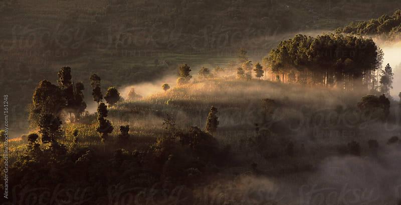 sunrise misty hill by Alexander Grabchilev for Stocksy United