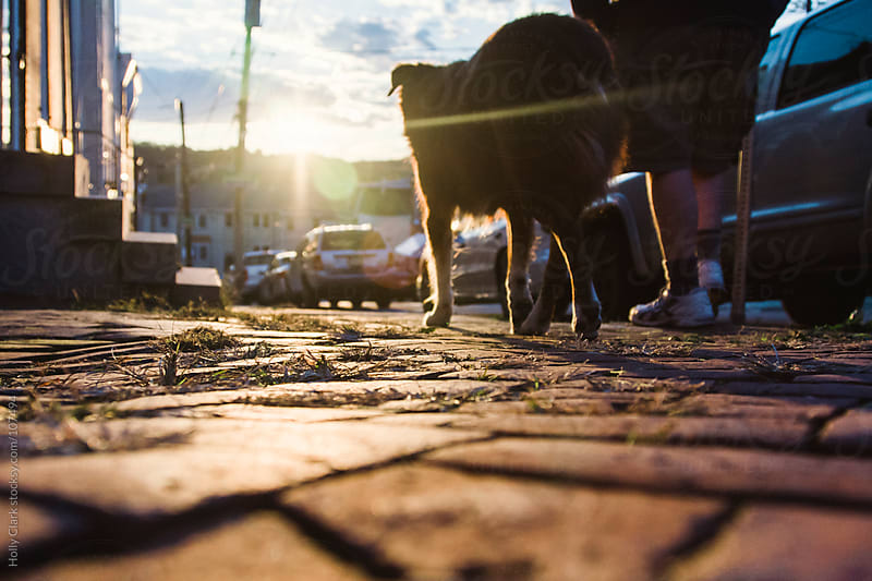 A man walks his dog down a brick sidewalk in the city at sunset. by Holly Clark for Stocksy United