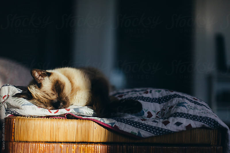 Adorable cat sleeps and baths in the sun on kennel