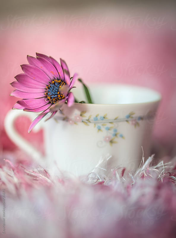 Little cup with flower by Eva Plevier for Stocksy United