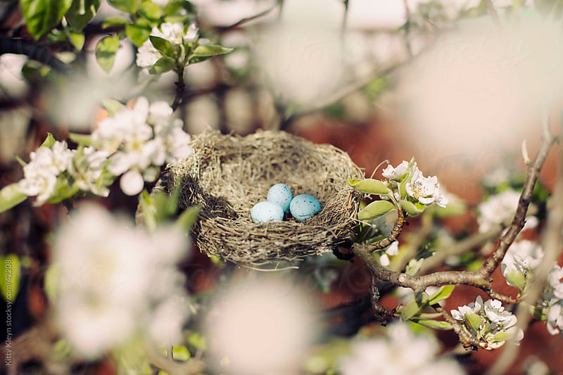 Nest in blossom by Kitty Kleyn for Stocksy United
