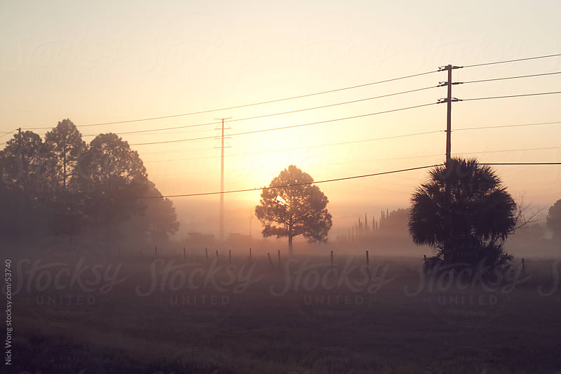 Tree at sunrise under powerlines. by Nick Wong for Stocksy United
