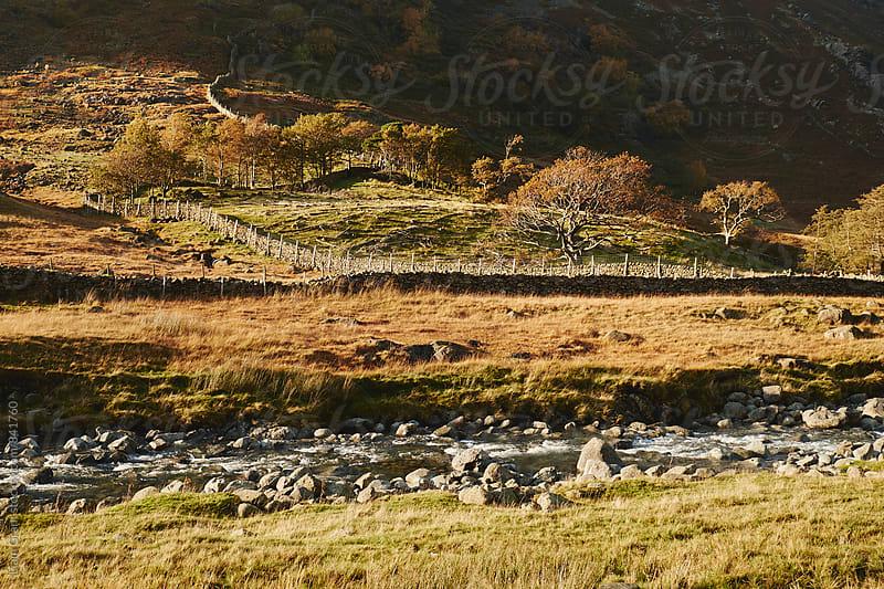 Sunlit trees. Seathwaite, Cumbria, UK. by Liam Grant for Stocksy United