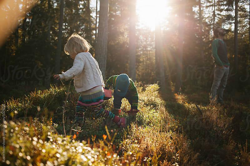 Little boy and girl gathering berries while dad is standing in the sun. by Koen Meershoek for Stocksy United