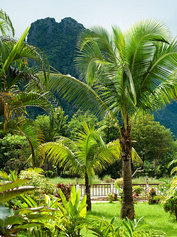 Tropical Garden in Laos by Goldmund Lukic for Stocksy United
