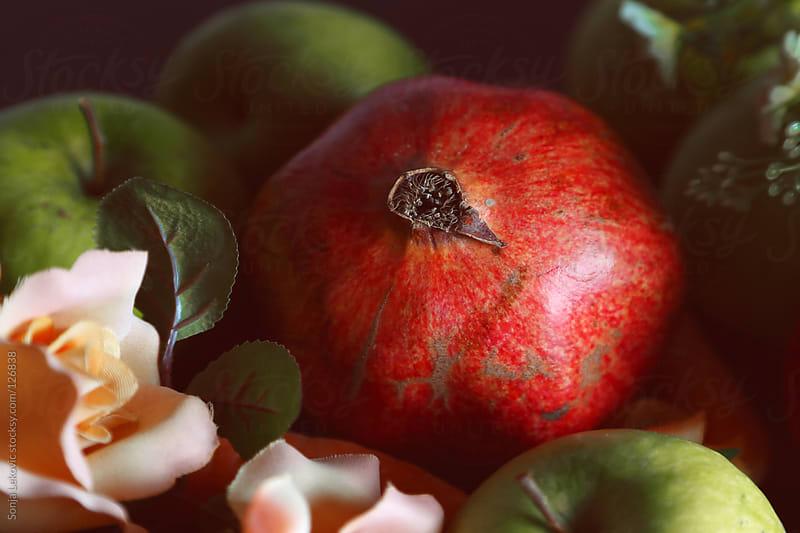 pomegranate by Sonja Lekovic for Stocksy United
