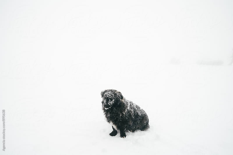 Frozen Dog by Agencia for Stocksy United