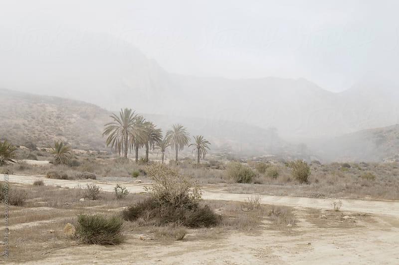 landscape in the mist by Rene de Haan for Stocksy United
