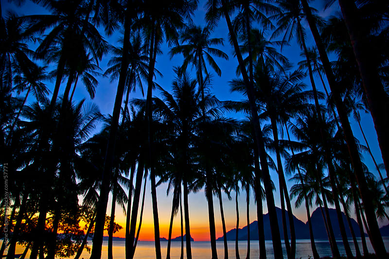 Dramatic sunset, looking through many palm trees, Las Cabanas Beach, Palawan Island, Philippines by Jaydene Chapman for Stocksy United