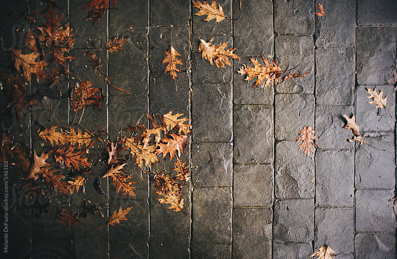 Wet Leaves by Melanie DeFazio for Stocksy United