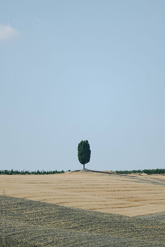 Lone tree on hill, Tuscany by Kirstin Mckee for Stocksy United