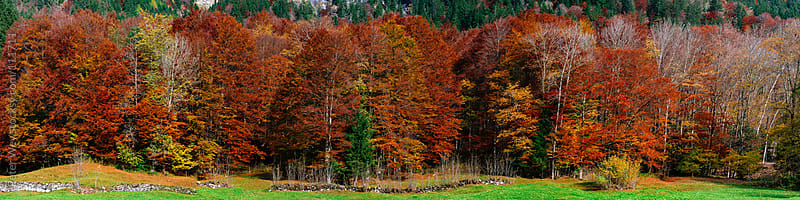 autumn forest by Peter Wey for Stocksy United