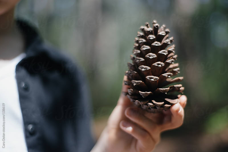 Child holds pine cone by Cara Dolan for Stocksy United