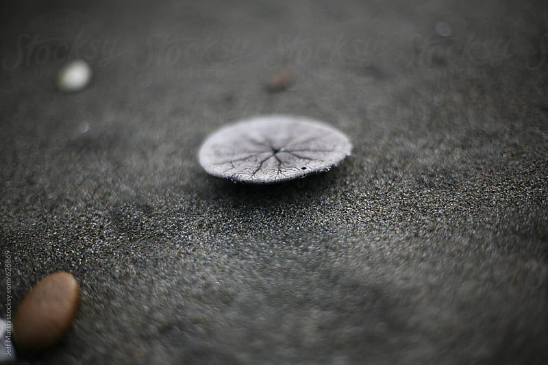Sand Dollar by Jeff Marsh for Stocksy United