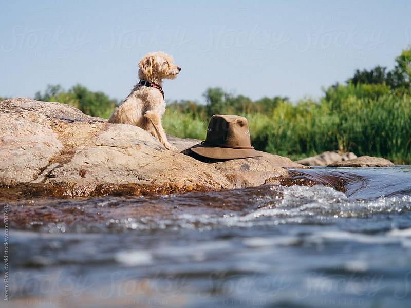 Puppy dog sitting next to safari hat on rock in river by Jeremy Pawlowski for Stocksy United