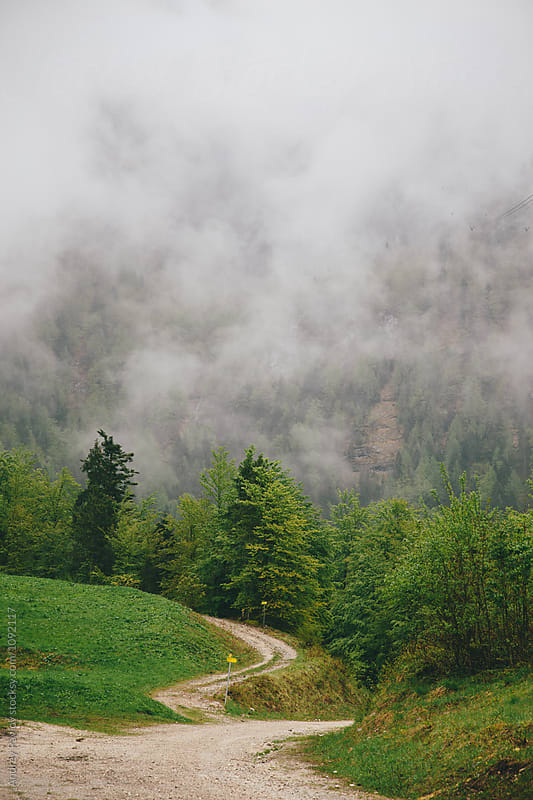 Countryside road in green forest in morning by Andrey Pavlov for Stocksy United
