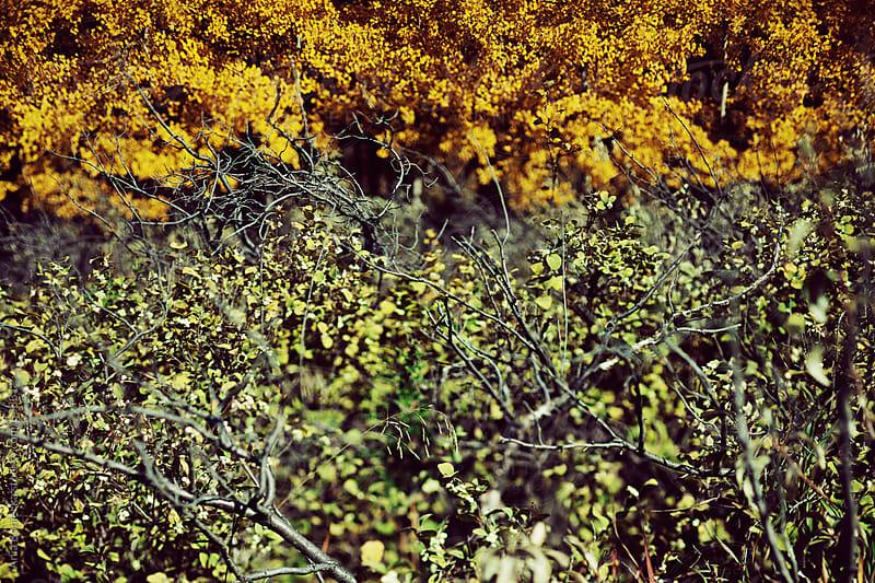 Autumn leaf textures by Ania Boniecka for Stocksy United