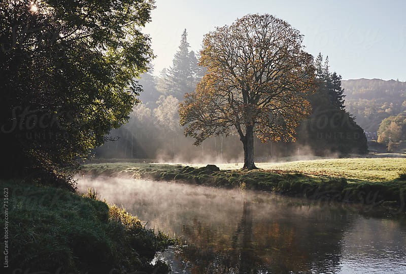 Morning sunlight over a tree reflected in the mist. Cumbria, UK. by Liam Grant for Stocksy United
