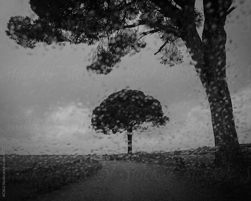 Black and white lonely tree a rainy day by ACALU Studio for Stocksy United