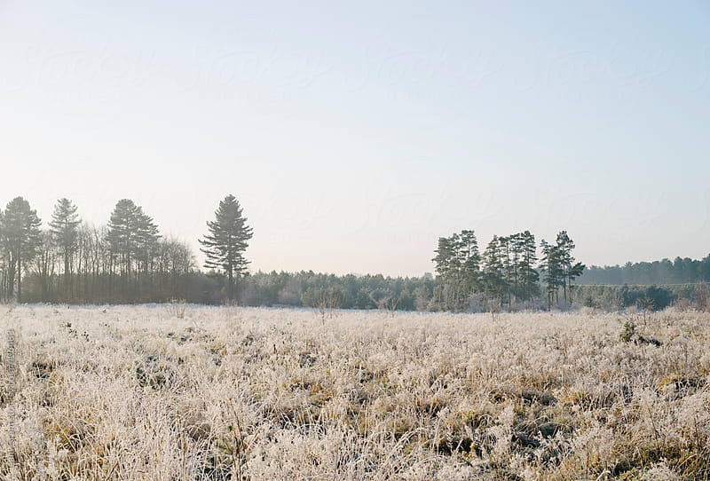 Heavy frost and forest on a winters morning.  by Liam Grant for Stocksy United