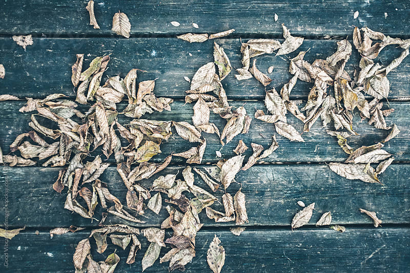 Leaves by Good Vibrations Images for Stocksy United