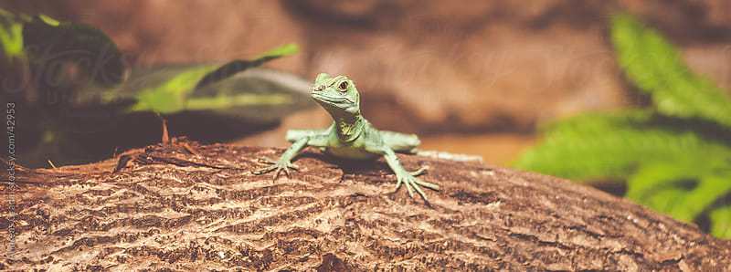 small lizard by Andreas Gradin for Stocksy United