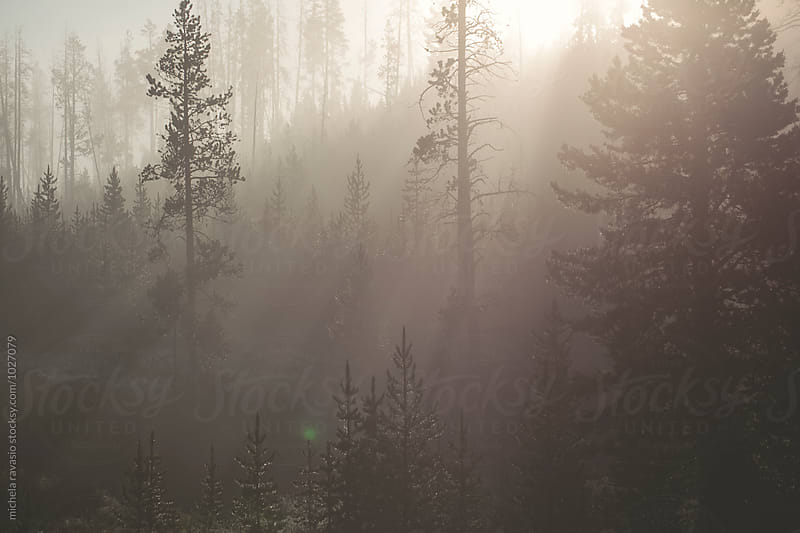 Sunbeams in the forest at dawn by michela ravasio for Stocksy United