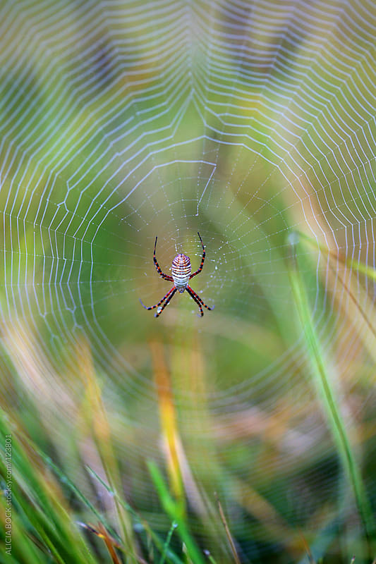 Spider In A Web by ALICIA BOCK for Stocksy United
