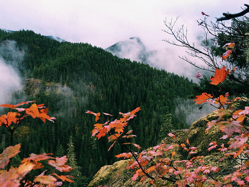 Foggy Fall Forest by Kevin Russ for Stocksy United