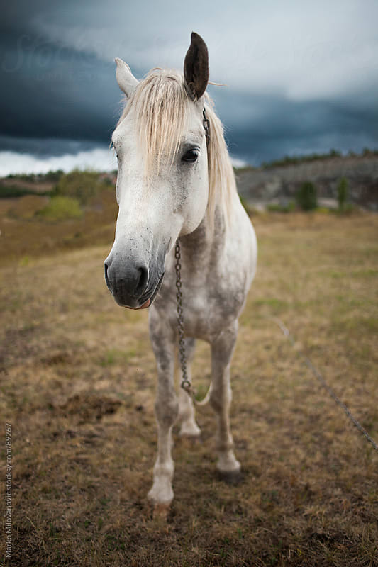 White horse on mountain meadow by Marko Milovanović for Stocksy United