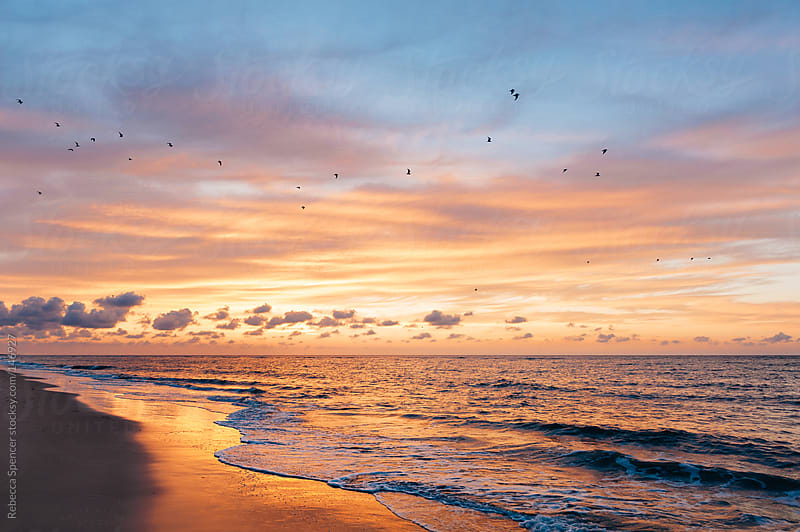 Birds flying across colorful sunset and beach by Rebecca Spencer for Stocksy United