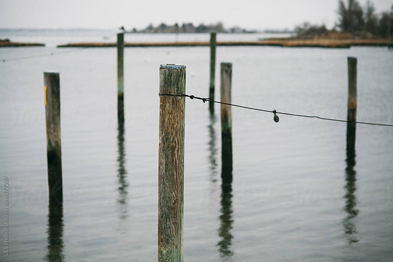 Posts in the water by L&S Studios for Stocksy United