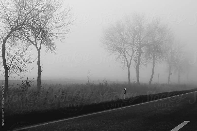 Foggy road by Tatjana Ristanic for Stocksy United