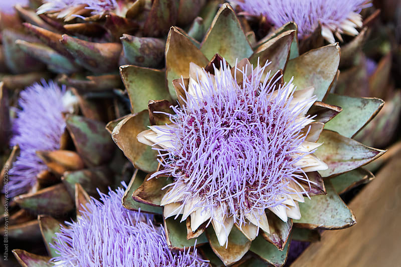 Closeup of blooming artichoke flowers in a wooden box at a farmers market by Mihael Blikshteyn for Stocksy United
