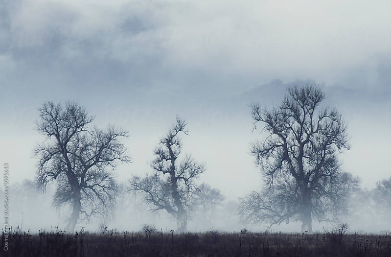 Trees on meadow with mist in the morning by Cosma Andrei for Stocksy United