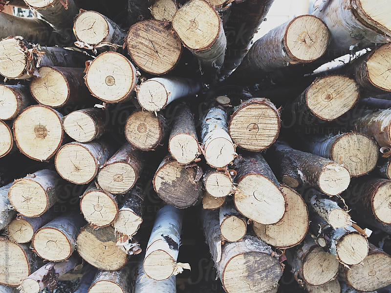 Close up of cut and stacked birch wood logs for firewood by Greg Schmigel for Stocksy United