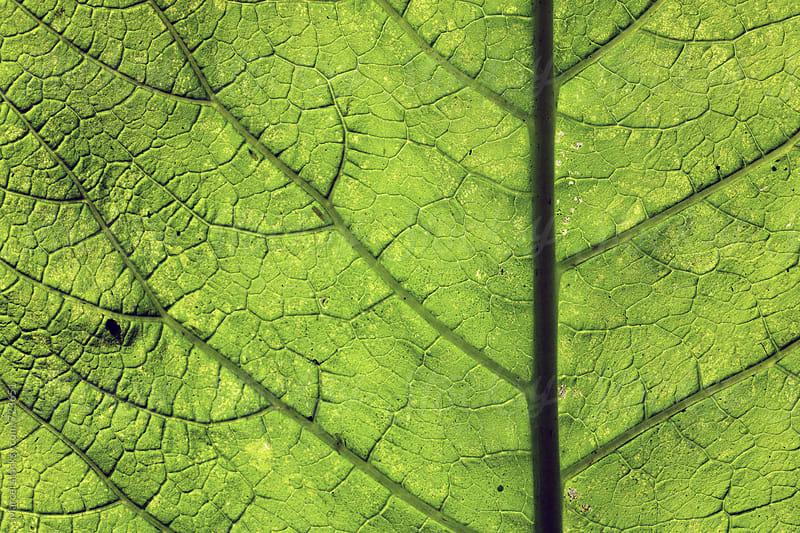 Green leaf macro by Marcel for Stocksy United