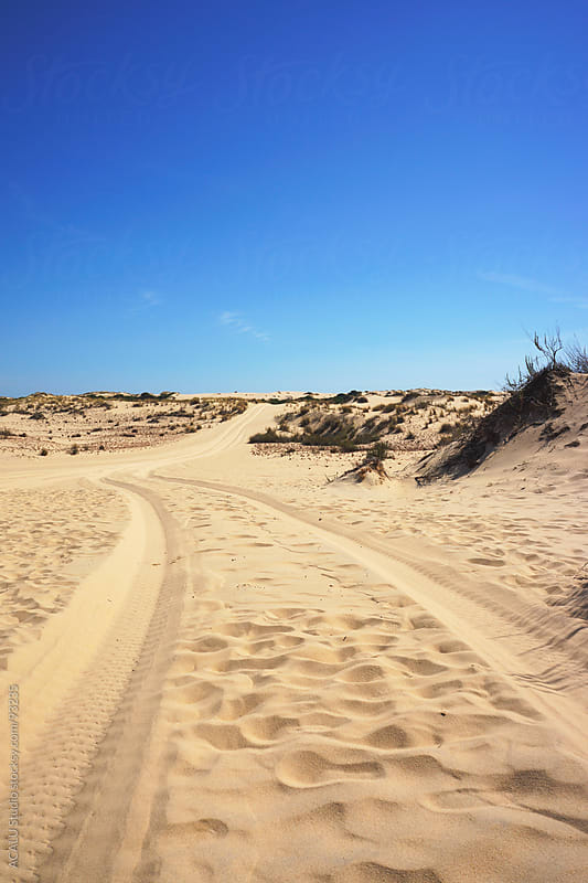 Car signs on a dune by ACALU Studio for Stocksy United