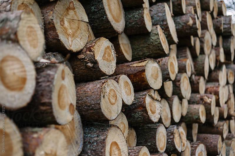 Pile of lumber. by Darren Muir for Stocksy United