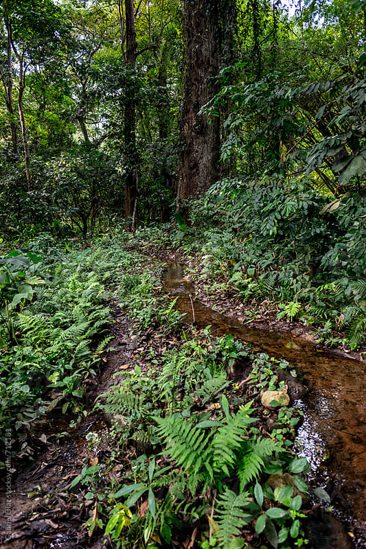 Small river in the middle of the tropical forest by Gabriel Diaz for Stocksy United