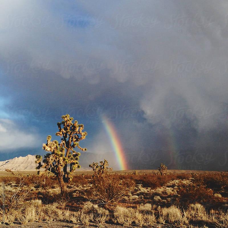 Joshua Tree Rainbow by Kevin Russ for Stocksy United