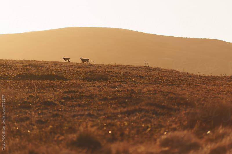 Sunset Deer by Casey McCallister for Stocksy United