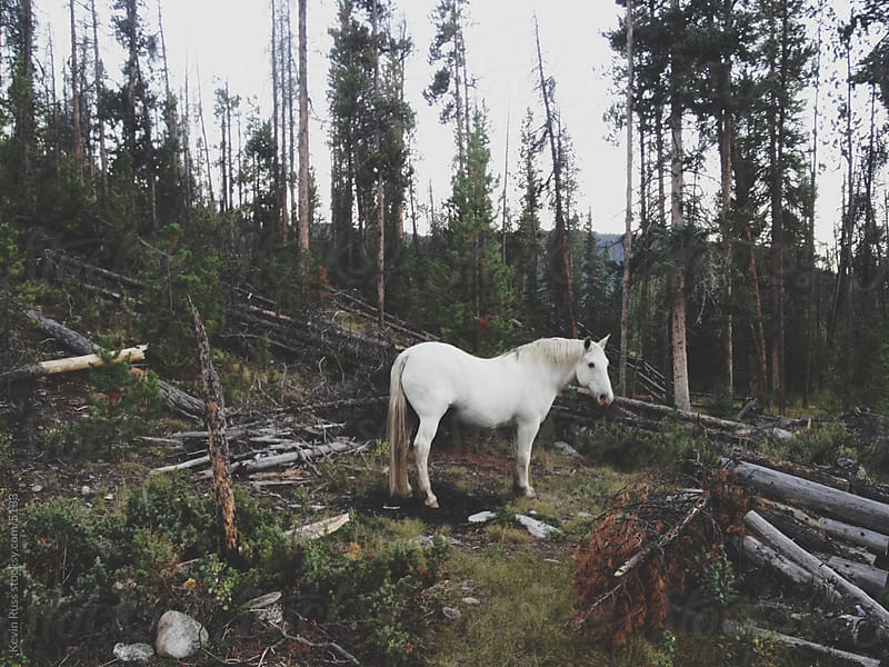 White Forest Horse by Kevin Russ for Stocksy United
