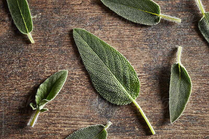 Close-up of green sage leaves by Martí Sans for Stocksy United