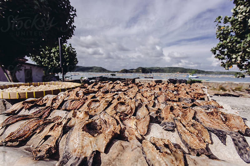 Fish drying under the sun. by Soren Egeberg for Stocksy United