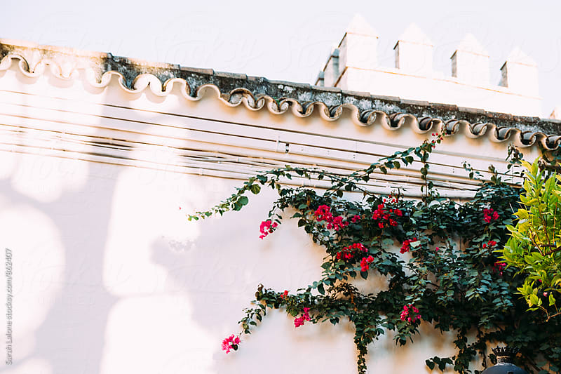 flowers on a wall in the alcazar of seville by Sarah Lalone for Stocksy United